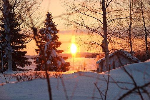Winter, Snow, Tree, Season, Cold, Frozen, Frost