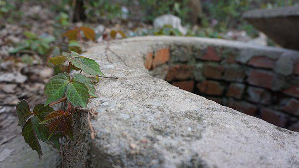 Nature, Leaf, Stone, Plant, Background, Well, Spring