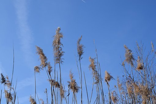 Stake Tube, Giant Reed, Blue Sky, Spring, Main Area