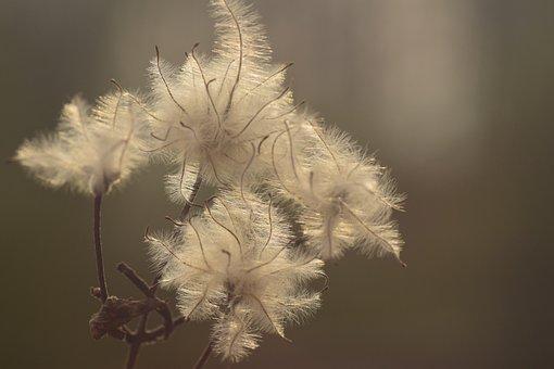 Back Light, Seeds, Tender, Background, Fibers, Sunrise