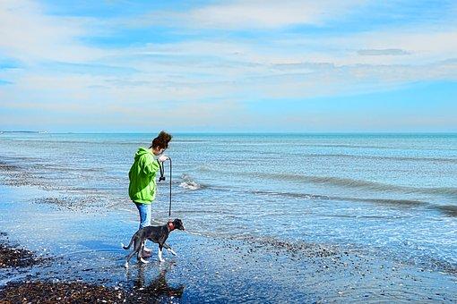 Waters, Sea, Travel, Summer, Beach, Dog, Walk