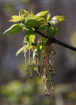 Tree, Inflorescence, Green, Decorative