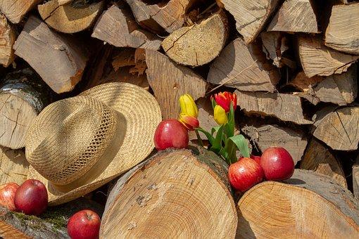 Apple, Wood, Hat, Tulip, Flower, Woods, Food, Nature
