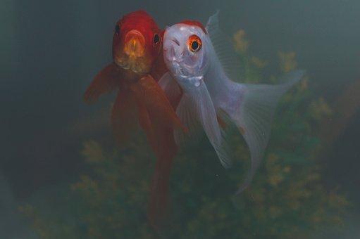 Water, Nature, Swimming, Underwater, Fish, Animal