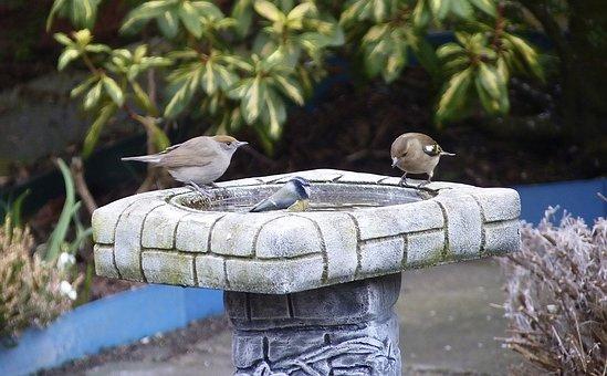 Nature, Bird, Garden, Wildlife, Stone