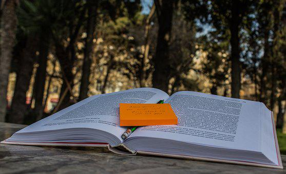 Nature, Outdoors, Summer, Wood, Travel, Book, Free Time