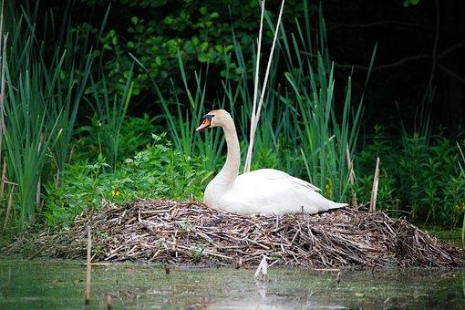 Nature, Waters, Puddle, Bird, Lake, Animal World