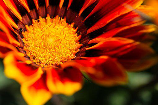 Flower, Nature, Plant, Summer, Color, Floral, Bright