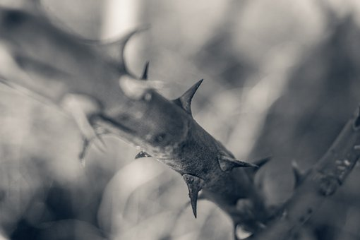 Nature, Animal World, Winter, Wood, Close, Mourning