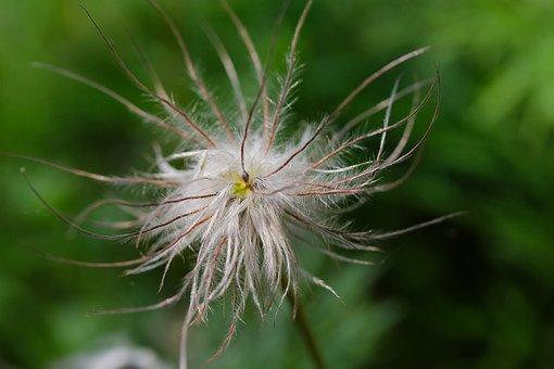 Nature, Plant, Summer, Grass, Flower, Bright, Close
