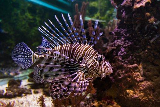Immersed, Tropical, Coral, Nature, Fish, Aquarium