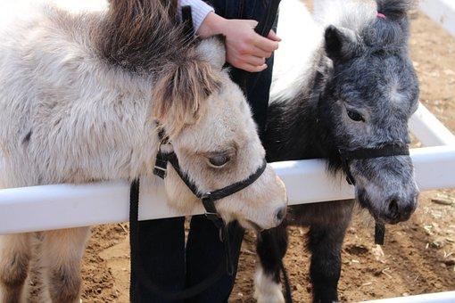 Animal, Farm, Cute, Livestock, Rural, Local Market
