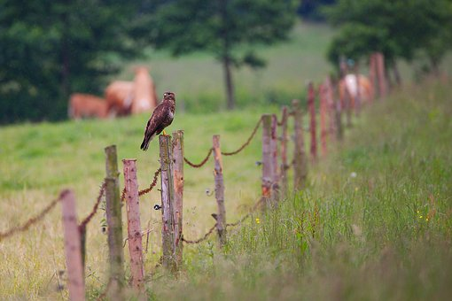 Nature, Grass, Fence, Landscape, Tree, Field, Wood