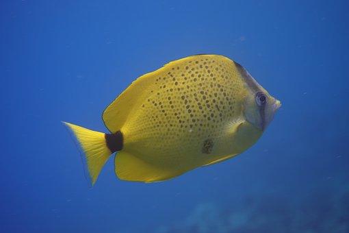 Fish, Underwater, Ocean, Tropical, Sea