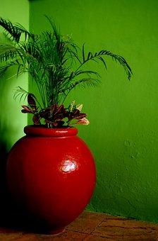 Desktop, Leaf, Color, Flora, Pot, Tropical, Decoration