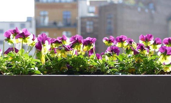 Flower, Garden, Nature, Plant, Floral, Balcony, Petal