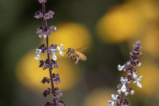 Bee, Flower, Nature, Flora, Outdoors, Leaf, Closeup
