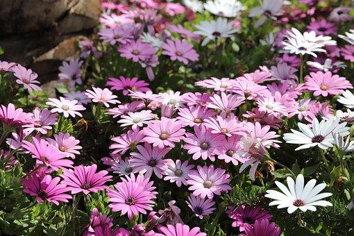 Flower, Plant, Nature, Garden, Petal, Flowering, Summer