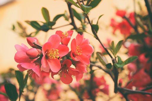 Flower, Flowers, Shrub, Flowering, Flower Flower