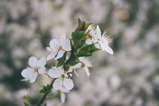 Flower, Flowers, Blooming Flowers, Spring