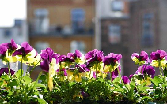 Flower, Garden, Plant, Nature, Floral, Balcony, Flowers