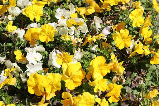 Flower, Plant, Garden, Nature, Leaf, Field, Floral