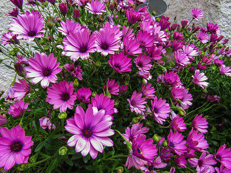 Flower, Nature, Plant, Summer, Garden, Petal, Flowering