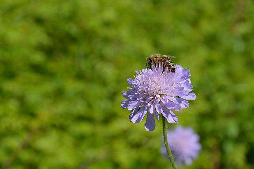 Nature, Summer, Flower, At The Court Of, No One, Insect