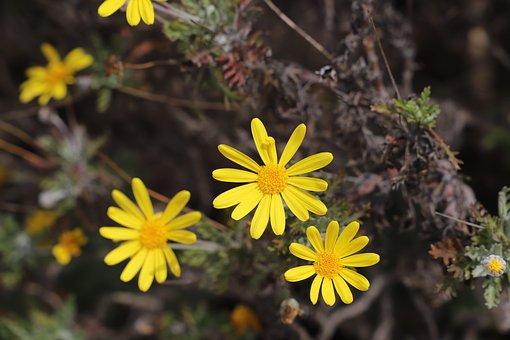 Nature, Flower, Plant, Outdoor, Summer, Wild, Flowering