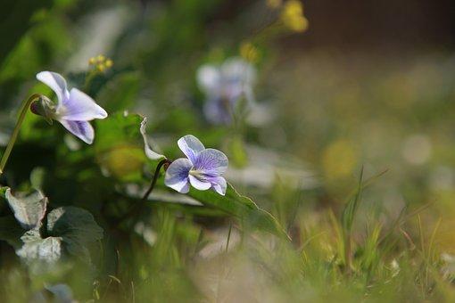 Nature, Noel Online Gift Shop, Flowers, Plants