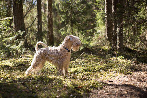 Animal, Dog, Canine, Forest, Outdoors, Nature, Park