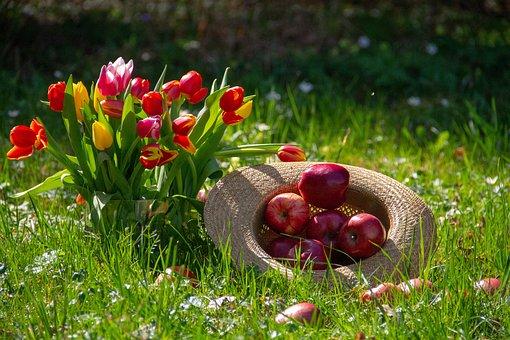 Apple, Fruit, Tulips, Flower, Red, Yellow, Orange
