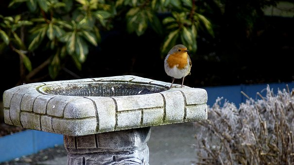 Nature, Garden, Water, Robin, Bird