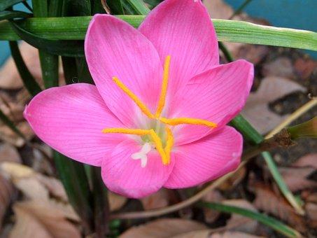 Flower, Nature, Plant, Garden, Leaf, Petal, Nice