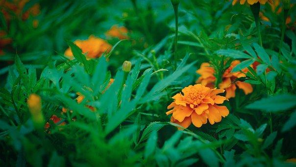 Nature, Leaf, Plant, Summer, Garden, Flower, Light