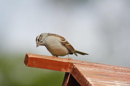 Bird, Nature, Wildlife, Outdoors, Little, Bird Feeder