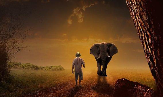 Elephant, Man, Sunset, Path, Mammals, Caregiver