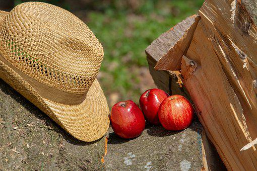 Apple, Fruit, Healthy, Wood, Woods, Nature, Hat, Food