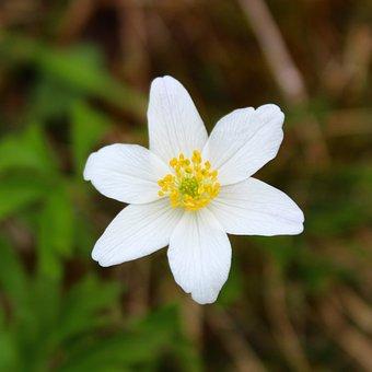 Flower, Nature, Plant, Petal, Garden, Summer, Flowers