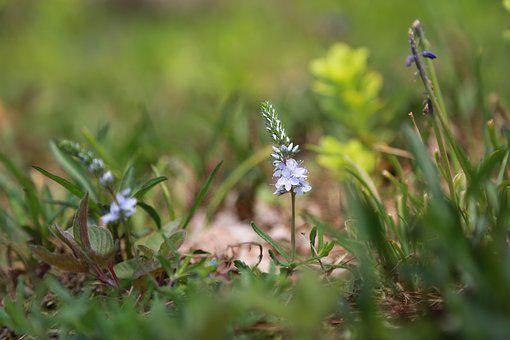 Nature, Plants, Flowers, Outdoors, Grass, Wild