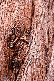 Wood, Tree, Bark, Old, Nature, Texture, Pattern, Rau