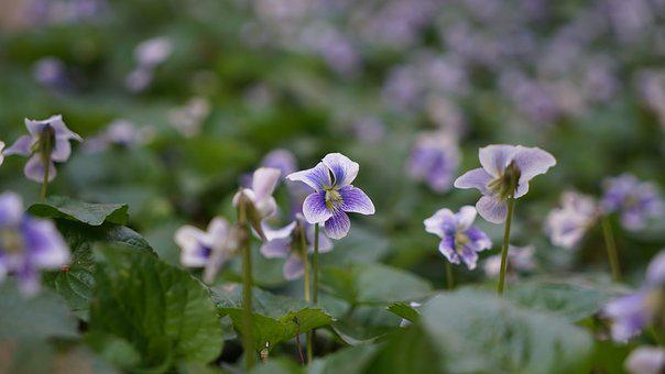 Flowers, Spring Flowers, Nature, Plants, Leaf, Outdoors