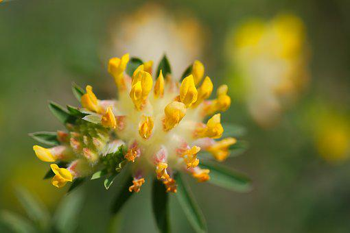 Flower, Nature, Plant, Leaf, Summer, Garden, Close