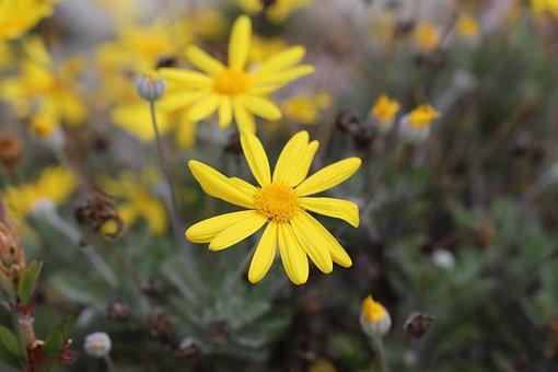 Nature, Plant, Flower, Summer, Outdoor, Field, Garden