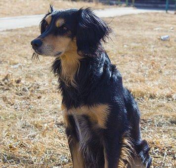 Dog, Mammals, Animals, Portrait, Cute, Cute Doggie