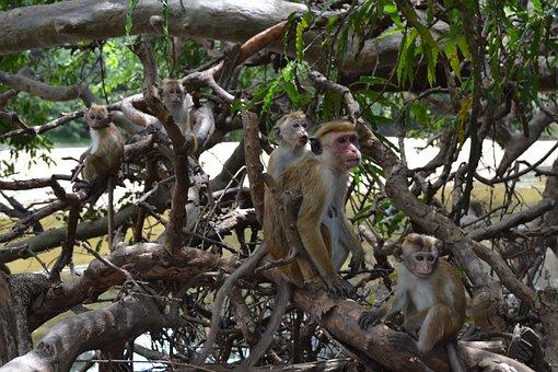 Monkey, Primacy, Tree, Jungle