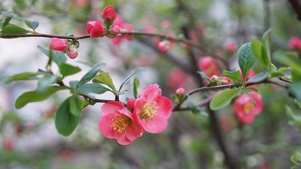 Quarter, Nature, Wood, Flowers, Plants, Spring