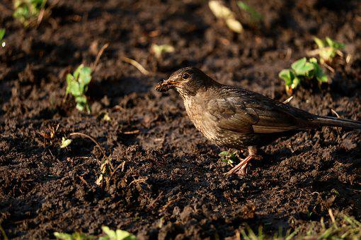 Nature, Animal World, Bird, Animal, Small, Dirty