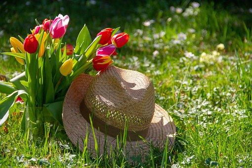 Tulips, Flower, Nature, Hat, Straw Hat, Grass, Garden