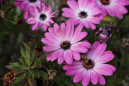 Flower, Nature, Plant, Garden, Flowering, Summer